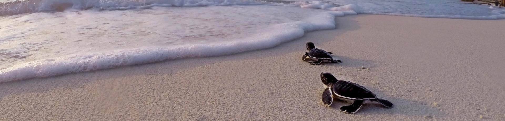 Strand-Schildkröte-Emotion