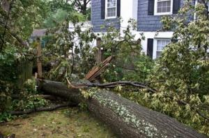 Ein Baum ist durch einen Sturm auf ein Gebäude gestürzt