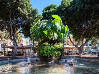 441+Spanien+Teneriffa+Puerto_De_La_Cruz+Plaza_del_Charco+GI-486183894