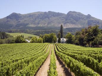 3793+Südafrika+Stellenbosch+GI-124613472