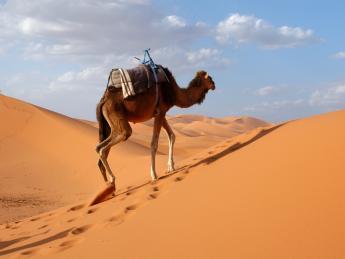 3626+Marokko+Marokko_-_Inland+TS_157751283
