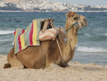 Tunesien - Oase Zarzis