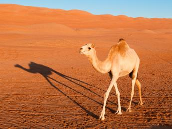 5260+Vereinigte_Arabische_Emirate+Fujairah+TS_146888423