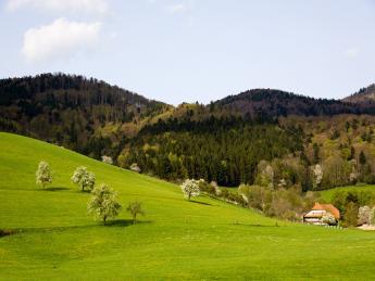 8420+Deutschland+Schwarzwald+TS_153158787