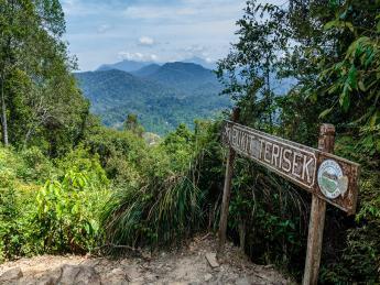 4880+Malaysia+Kuala_Tahan_(Taman_Negara_National_Park)+GI-540372484