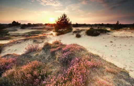 Schoorlse Duinen - Niederlande
