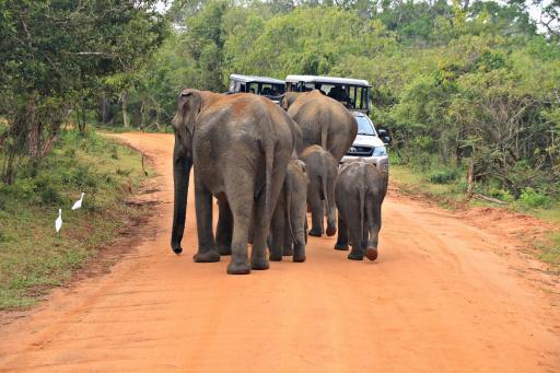 Sri Lanka: Yala National Park Safari