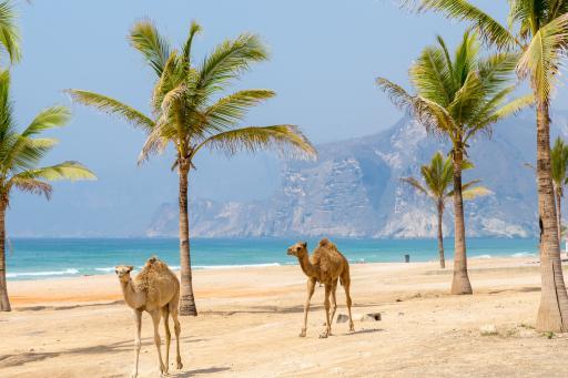 175+Oman+GI-667605905