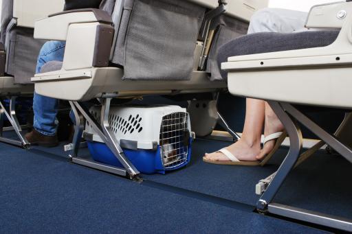 Flugzeug+Füße+Tier