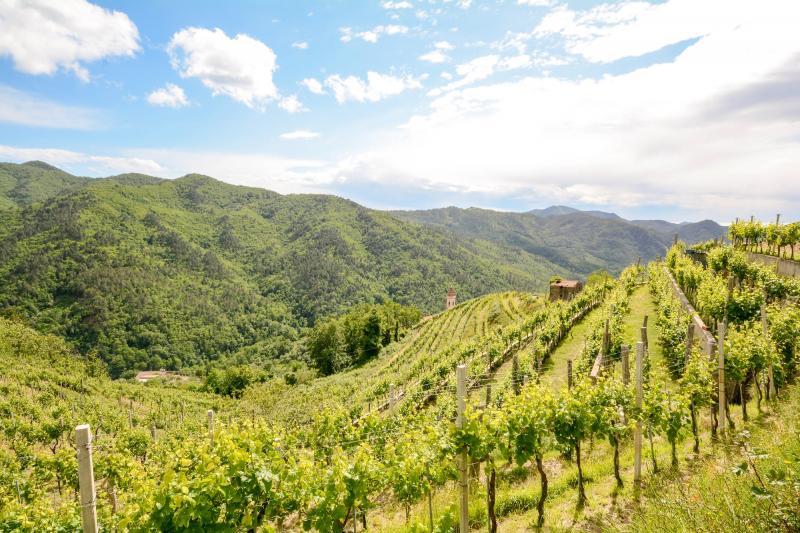 Frankreich: Bordeaux - Weinanbaugebiet